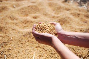 Soya fasulyesinde nasıl yatırım yapılır?