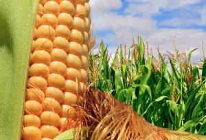 Tarımsal emtia fiyatlarını etkileyen unsurlar nelerdir?